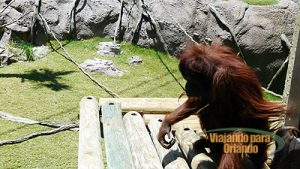 Orangutan Outpost