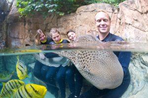Discovery Cove lança nova experiência de nado com tubarões
