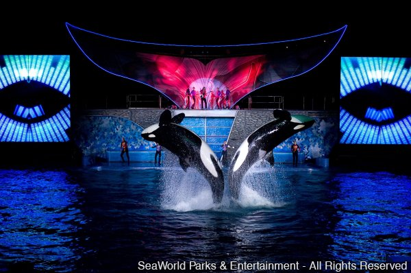 SeaWorld Summer Nights