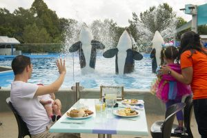 SeaWorld Orlando – Tours