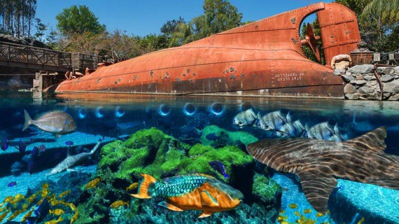 A atração Shark Reef do Disney's Typhoon Lagoon será fechada definitivamente