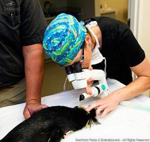 De Polo a Polo, o SeaWorld inova nos cuidados veterinários