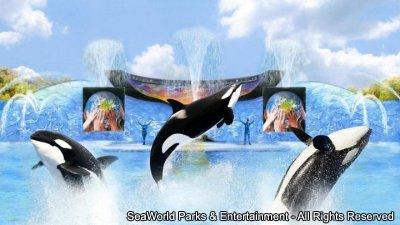 One Ocean é o novo show da Shamu nos parques SeaWorld