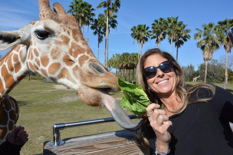 Ivete Sangalo convida amigos famosos para se aventurar no Busch Gardens Tampa Bay