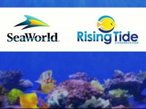 Busch Gardens Tampa Bay inaugura aquário para conscientizar sobre danos no ecossistema