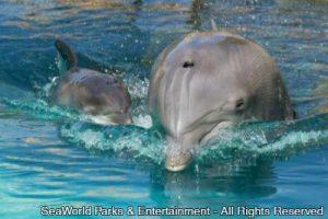 Mais um golfinho nasce no Discovery Cove, em Orlando (FL)