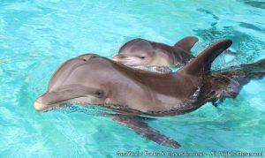 Discovery Cove celebra o nascimento de mais um golfinho