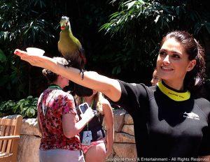 Natália Guimarães grava para o Hoje em Dia nos parques SeaWorld na Flórida
