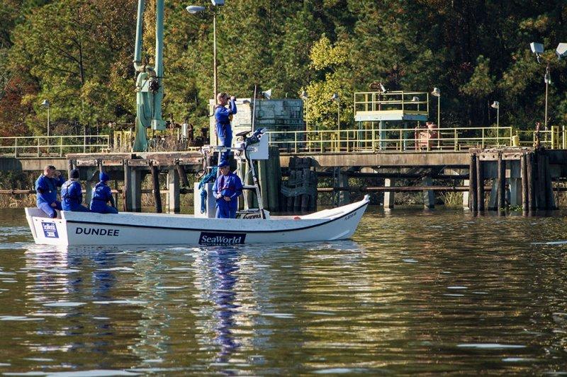 SeaWorld encerra o ano com mais um caso de sucesso de resgate e reabilitação de peixe-boi