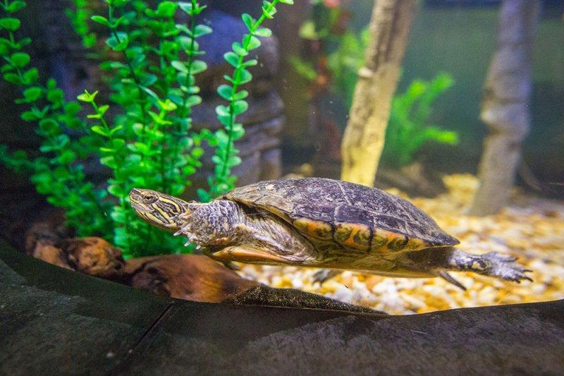 A exibição Turtle Fest é a novidade do Sea Life Orlando Aquarium