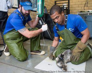 SeaWorld atinge a marca de mais de 25 mil animais resgatados