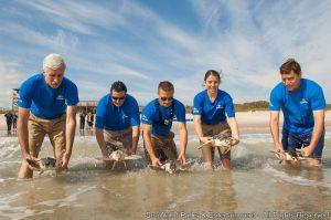 Equipe de resgate e reabilitação do SeaWorld comemora ação de sucesso com tartarugas