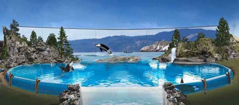 SeaWorld anuncia última geração de orcas sob cuidados da companhia