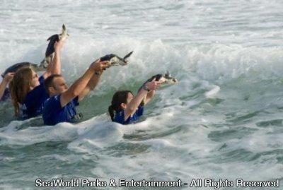 Após processo de reabilitação, SeaWorld Orlando devolve 14 tartarugas marinhas à natureza