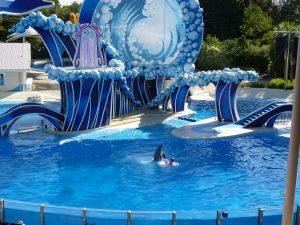 SeaWorld Orlando anuncia nova apresentação com golfinhos Dolphin Days