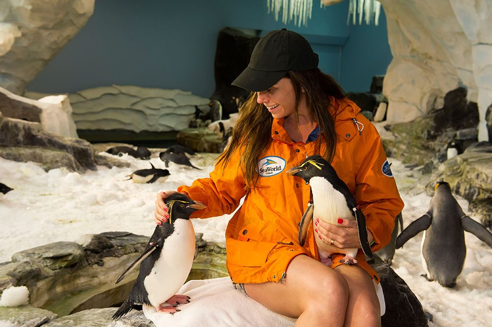 Giovana Antonelli diverte-se com pinguins no SeaWorld Orlando