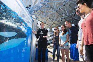 Incremente sua visita ao SeaWorld Orlando com tours interativos e educacionais