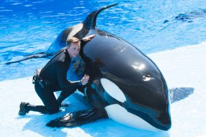 Atualização – Informação sobre funcionamento de Parques SeaWorld na Flórida