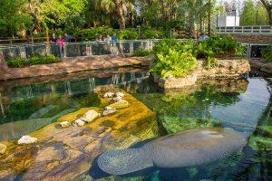 O SeaWorld Orlando acaba de inaugurar a Manatee Rehabilitation