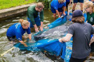 SeaWorld atinge marca histórica de 30 mil animais resgatados