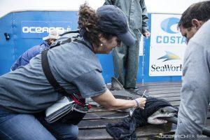 SeaWorld une-se a organização líder em pesquisa e preservação de animais marinhos