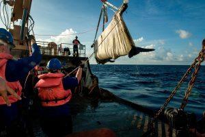 Baleia piloto reabilitada é devolvida com sucesso ao oceano