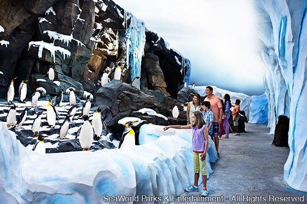 Informações curiosas sobre os pinguins e a Antártica