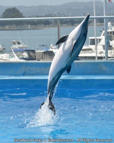 No Dia de Ação de Graças, SeaWorld celebra mais uma história de sucesso
