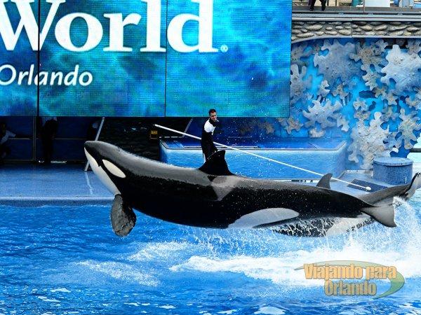Já é possível ter assentos reservados para os shows do SeaWorld