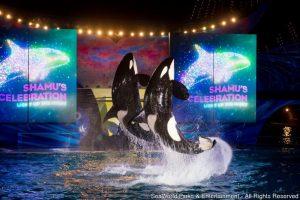 Shows ao vivo no SeaWorld e festa noturna no Aquatica marcam o verão em Orlando