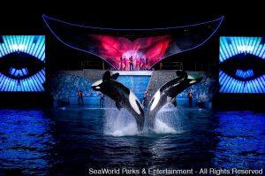 Programação especial esquenta o verão no SeaWorld Orlando e Busch Gardens Tampa