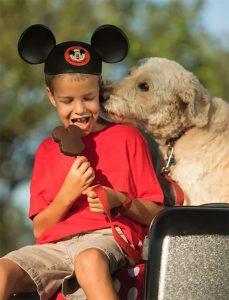 A Disney está aceitando cães em alguns dos seus hotéis
