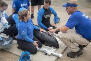 O SeaWorld Orlando participou do resgate de um golfinho da espécie cabeça-de-melão