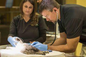 Busch Gardens recebe certificação da American Humane pelo tratamento oferecido aos animais