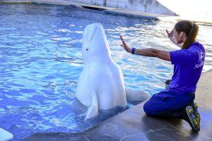 O SeaWorld Orlando está oferecendo gratuitamente passeios pelos bastidores nos fins de semana de janeiro
