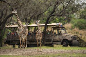 Jabari, o novo filhote de girafa do Animal Kingdom