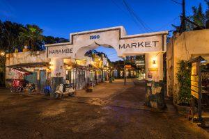 Circle of Flavors: Harambe at Night é a nova experiência gastronômica do Animal Kingdom