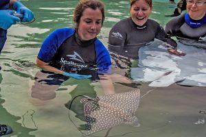 Discovery Cove anuncia o nascimento de arraias-pintadas