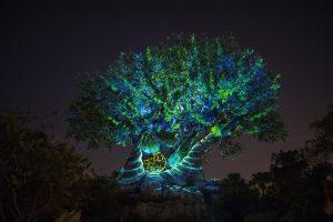 Tree of Life Awakens – The Lion King