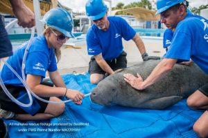 Especialistas do SeaWorld afirmam que as ameaças à fauna marinha estão aumentando