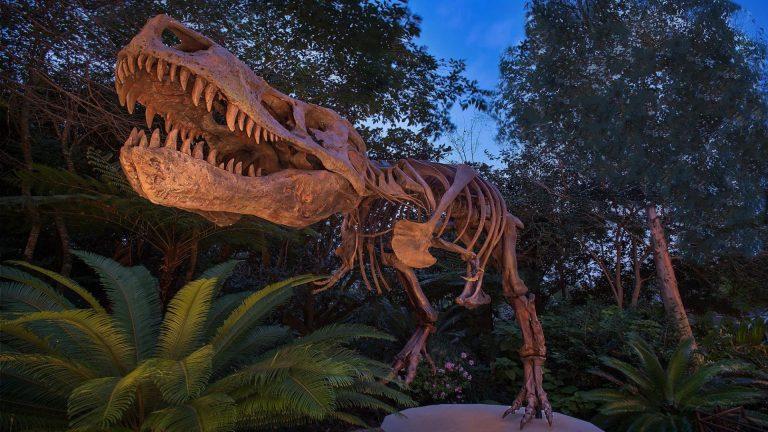 Dino-Sue