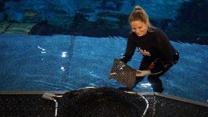 Novo episódio de Magic of Disney's Animal Kingdom mostra o cuidado com os animais
